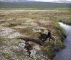 La fonte du pergélisol pourrait avoir des conséquences désastreuses sur le climat