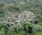 La forêt amazonienne durablement affectée par la sécheresse