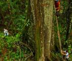 La pollution perturbe le cycle d'azote des forêts tropicales