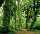 La préservation des forêts tropicales est vitale dans la lutte contre le réchauffement climatique