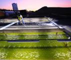 La production de biocarburants à partir d'algues marines décolle aux Etats-Unis