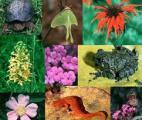 La Terre compterait 8,7 millions d'espèces