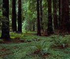 Le changement climatique menace les forêts de plaine