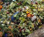 Le gaspillage alimentaire coûte 555 milliards d'euros par an à la planète !
