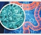 Le microbiote intestinal participe au fonctionnement du cerveau et à la régulation des humeurs