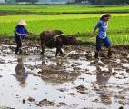 Le réchauffement climatique aura des conséquences sur la qualité nutritionnelle des productions agricoles