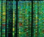 Le séquençage à haut débit pour un meilleur diagnostic des maladies neuromusculaires