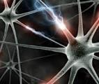 Le système nerveux central peut également se régénérer !