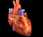 L'entreprise BIOLIFE4D réussit à imprimer en 3D un cœur humain miniature