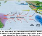 Les effets d'El Niño sur la production mondiale de céréales mieux évalués