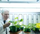 Les engrais vont-ils être remplacés par l'azote atmosphérique ?