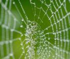 Les étonnantes propriétés des toiles d'araignées enfin expliquées