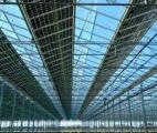 Les panneaux solaires semi-transparents alimentent les serres en énergie sans ralentir la croissance des végétaux