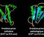 Les prions commencent à livrer leurs secrets