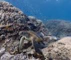 L'étude de micro-organismes dans les grands fonds marins de la fosse de Nankai au Japon permet de repousser les limites de la ...