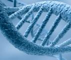 Microsoft réussit à convertir les informations numériques en ADN