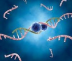 Modification des ARN : un nouveau moyen de réguler l'expression des gènes