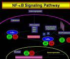 Découverte d'une molécule-clé dans le déclenchement du cancer