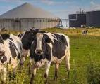 Première en France : une production de biométhane valorise le CO2 pour cultiver des légumes