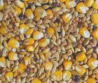 Production agricole : faire les bons choix pour la planète