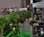 Quand les robots apprennent à cueillir les fruits…