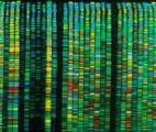 Que cachent les séquences interdites du génome ?