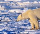 Réchauffement climatique : vers une hausse importante du niveau de la mer ?