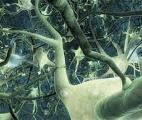 Réseaux de neurones : le rôle organisateur du hasard