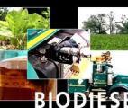 Un nouveau catalyseur enzymatique pour produire du biodiesel