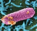 Un nouveau projet européen examine les microbes voyageurs