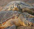 Un reptile sur cinq menacé d'extinction