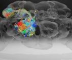 Un réseau nanométrique qui imite le cerveau humain