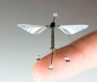 Un robot abeille biomimétique et résistant aux chocs
