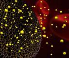 Un traitement combinant RNA et nanoparticules contre le cancer des ovaires