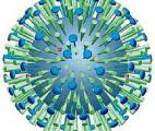Un vaccin antigrippal plus efficace en cas de mutation du virus