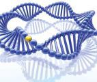 Une lumière pour activer les gènes