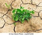 Une petite molécule rend les plantes résistantes à la sécheresse