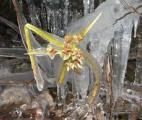 Une plante qui renaît après 400 ans d'hibernation !