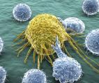 Une protéine modifiée booste les cellules anti-cancéreuses