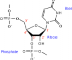 Une simulation révèle l'origine des premières molécules biologiques