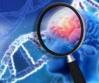 Une thérapie génique arrête la maladie d'Alzheimer chez des souris
