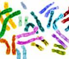Vers un contrôle fin du génome