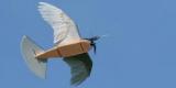 Un robot volant avec de vraies plumes