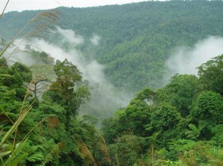 Les arbres jouent un r le cl dans la formation des nuages et sur le climat - Tuer un arbre avec de l acide ...