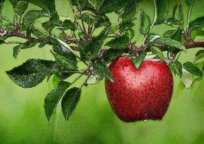 Maladie pomme de terre