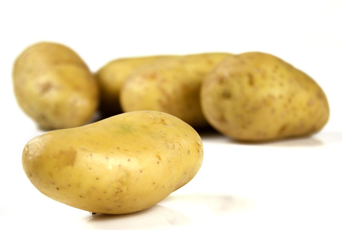 Une pomme de terre qui r siste au sel - Ramassage pomme de terre ...